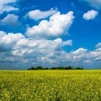 синее и желтое. :: Артем Фисенко