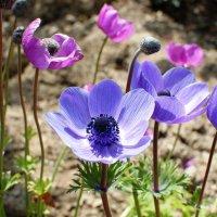 Ботанический сад :: Oxana Nanelly