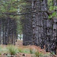 В лесу. :: Александр Лонский