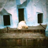 Часок вздремнуть :: Александра Карафинка