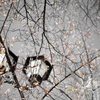 осень :: машенька давыдова