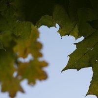 Осень :: Елена Васильева