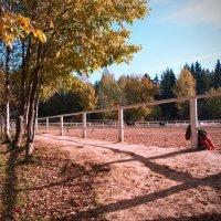 Осень :: Светлана ...