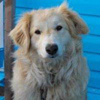 Лиза бывший бездомыш,а нене моя любимая собака (история Лизы в комментариях) :: Любовь Анищенко