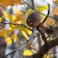 Грибы на деревьях не растут! :: Мария Арбузова