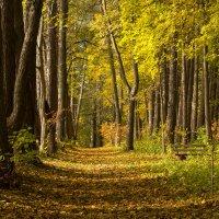 Осень в деревне Выбити :: Татьяна Григорьева-Яковлева