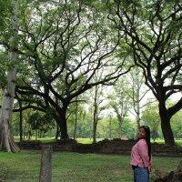 Деревья в Историческом парке :: Владимир Шибинский