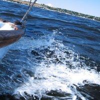 море :: виталий буцанов