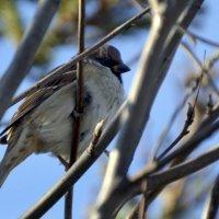 Птах :: Олеся