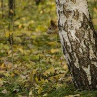 Хвостатое дерево :: Светлана Винокурова