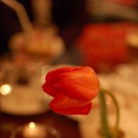 Тюльпан :: Oxana Nanelly
