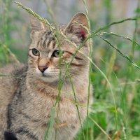 кошка :: Ю Р