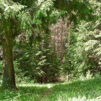 Русский лес... :: Олег Кошкаров