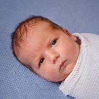 Фотосъемка новорожденных :: Надежда Боровая