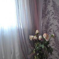 увядшие розы :: Анастасия Аничкина