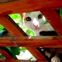 недовольная греческая кошка :: Никита Шпаченко