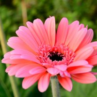 Цветы :: Никита Шпаченко