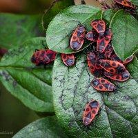 из жизни насекомых :: Olesia Kasabova