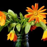 Симпатишные цветочки, не помню как называются) :: Konstantin Grachev