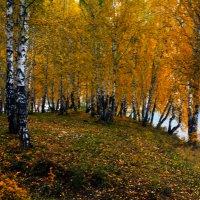 У озера :: Евгений Рыгин