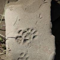 Следы на песке :: Irina *