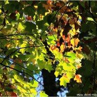 Осенний свет :: Виктор Марченко