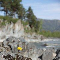 Солнышко в горах :: Irina *