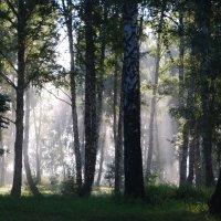 В поход за туманами .2 :: Татьяна Аистова