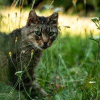Дикий кот :: Дмитрий