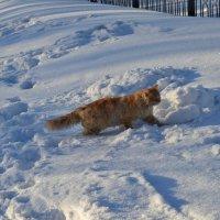 Рыжик на снегу... :: Георгиевич