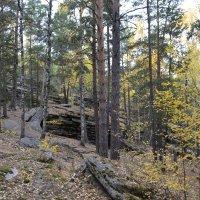 Лесной уголок... :: Георгиевич