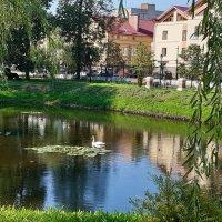 А белый лебедь на пруду... :: Нина Андронова