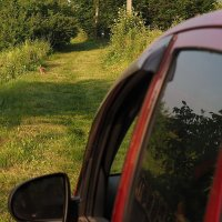 Осторожно ! Зайцы на дороге ! :: Александр Резуненко