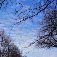 Небесная тропа :: Юлия Deimos