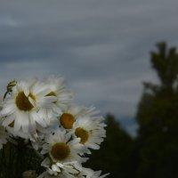 на ветру :: Наталия П