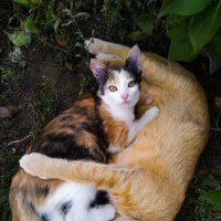 кошачья мать :: Анастасия Верушкина