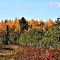 Осень...Ловите каждое мгновение! :: ЛЮДМИЛА