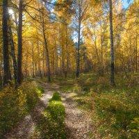 В осеннем лесу :: Vladimbormotov