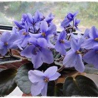 Её цветы из шёлка, из бархата листы... :: Любовь Чунарёва