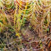 осенние паутины :: Юра Викулин