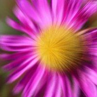 Цветы :: Николай
