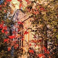 Осенние листья :: Сергей Кочнев