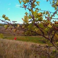 Одинокая ягода :: Ирина Бондарева