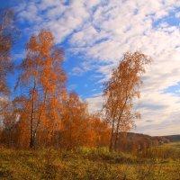 Осенним золотом горят... :: владимир тимошенко