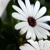 Цветок. :: Азамат