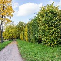 Осенний парк :: Ирина Пастушенко