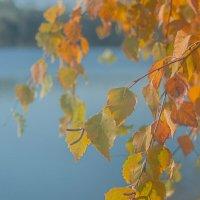 Теплый свет октября :: Лихо Одноглазое