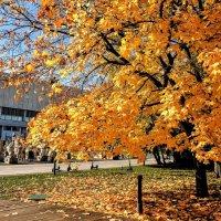 Жаркая осень в парке Музеон :: Анатолий Колосов