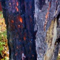 Мокрые деревья :: Михаил