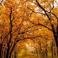 осень :: Влад